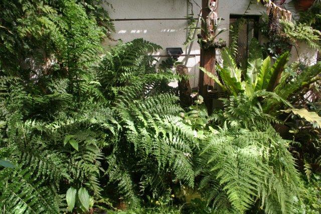 Orquideas y helechos for Plantas ornamentales helechos